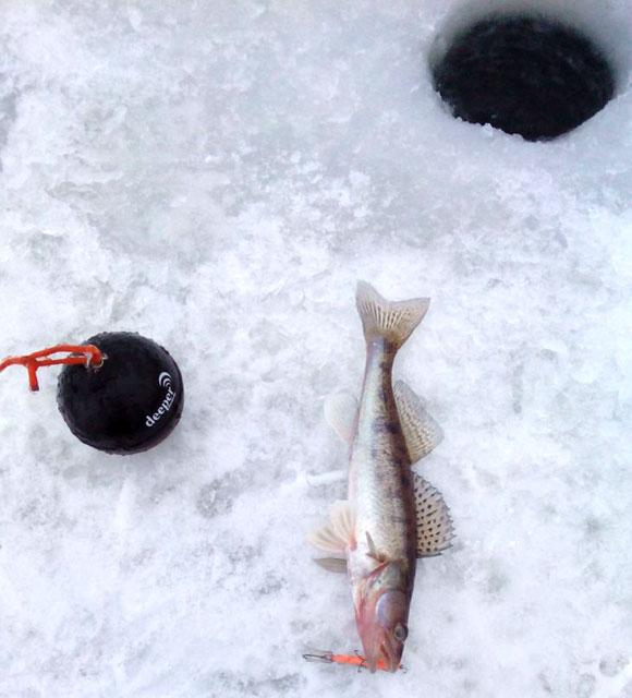 Совсем мелкий (200 грам) судачок пойманный с помощью эхолота Deeper