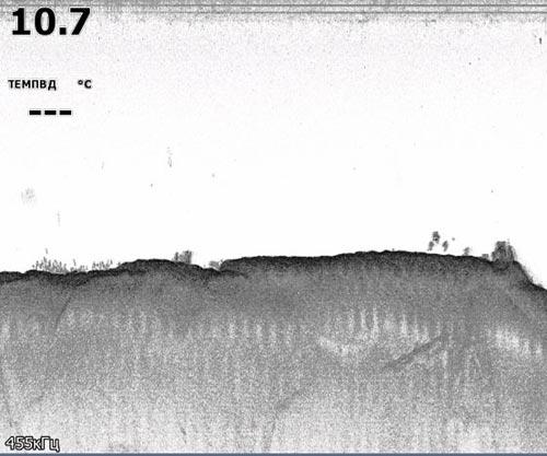 В левом угле у дна мелкая рыба (величиной с ладонь). В правом углу на дне кляксами изобразилась группа  крупных рыб.